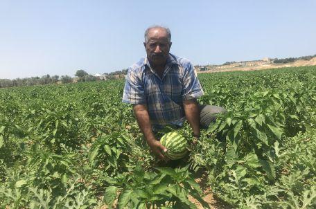 Farmer Riad Al Nisser in his watermelon field, 2019. Photo by Gisha