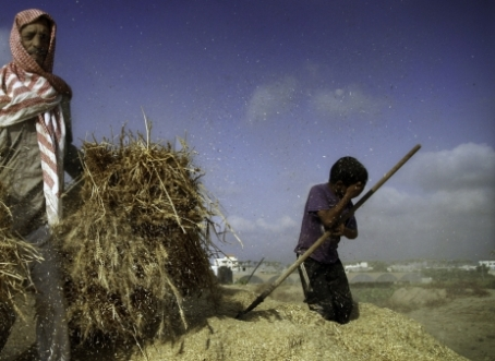 Farmers from Gaza share that the practice dates to a number of years ago. Photo: Eman Mohammed