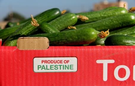 הפעם הראשונה שבה משווקת סחורה מעזה בגדה מאז יולי 2007. המלפפונים ששווקו היום (צילום: גישה)