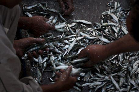 דגים בנמל עזה. צילום: אימאן מוחמד