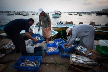 صيادو سمك في غزة. تصوير: إيمان محمد