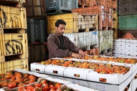 מטען העגבניות שיצאו היום. צילום: גישה