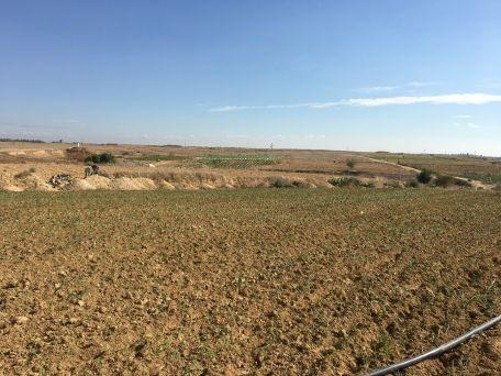 שדה סמוך לאזור החיץ. צילום: גישה