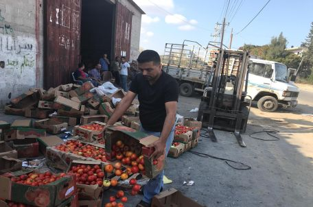 Image: Farmers in the Khan Younis area discard their produce following Israel's closing of Kerem Shalom Crossing, yesterday. Photo by Gisha.
